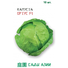Капуста белокочанная Ортус F1 | 10 шт | Сады Азии