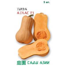 Тыква Атлас F1 | 5 шт | Сады Азии