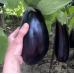 Семена Баклажана сорта Эпик F1 | 10 шт