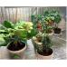 Фитолампа Fitoled 70 Eco Blue (ДСП 02-70-004) | 102 см