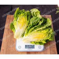 Салат кочанный Бернар | 0.5 г | Партнер