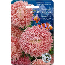 Астра Хризантелла коралл   30 шт   Биотехника