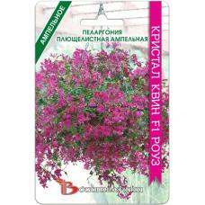 Пеларгония плющелистная ампельная Кристал квин F1 роуз | 5 шт | Биотехника