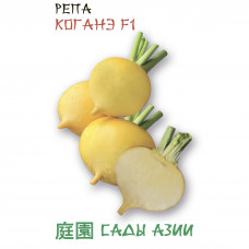 Репа Коганэ F1 | 0.5 г | Сады Азии