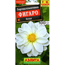 Георгина махровая Фигаро белая | 7 шт | Аэлита