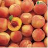 Система защиты персика и нектарина