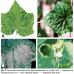 Болезни овощных культур в тепличных комбинатах