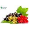 Фитоверм для защиты ягодных кустарников от вредителей